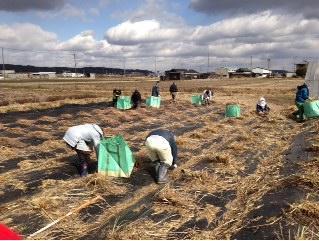 畑の掃除.JPG